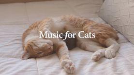 จริงจัง!! วาทยากรจับมือนักวิทย์ สร้างดนตรีสำหรับแมว
