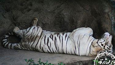 เที่ยวสวนสัตว์เขาดิน ย้อนรำลึกวัยเด็ก