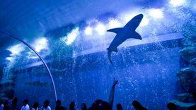 ชวนเที่ยวบึงฉวาก ชมสัตว์น้ำหลากสายพันธุ์ สวรรค์แห่งโลกใต้ทะเล