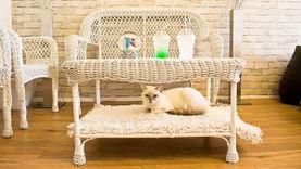 จิบกาแฟ นั่งชิลล์กับเหมียว ที่คาเฟ่แมว Charming Cat Café and Pet Shop