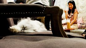 Purr Cat Café Club ร้านกาแฟแมว กับเครื่องดื่มแก้วโปรด