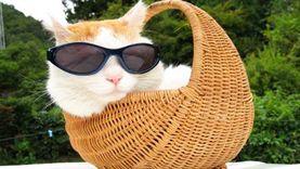 วันแมวโลก รู้จักแมวดังขึ้นแท่นเซเล็บทั่วโลก แมวญี่ปุ่น เซเล็บแมวในไทย แมวอโศก
