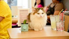 Cataholic café ร้านกาแฟแมว สำหรับคนรักเหมียว