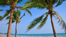 เที่ยวทะเลใกล้กรุงเทพฯ ชิลล์ยามบ่ายที่หาดแม่รำพึง แวะชิมอาหารทะเลสดที่บ้านเพ ระยอง