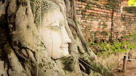 เศียรพระพุทธรูปกว่าร้อยปีในรากไม้  วัดมหาธาตุ  พระนครศรีอยุธยา