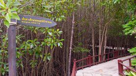 ชมธรรมชาติ เดินชิลล์ที่ ศูนย์ศึกษาเรียนรู้ระบบนิเวศป่าชายเลนสิรินาถราชินี ปราณบุรี