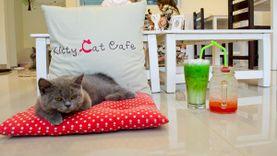 Kitty Cat Café คาเฟ่แมว เทรนด์ใหม่สำหรับคนรักเหมียว
