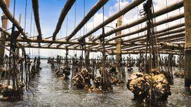 ชิลล์ล่องเรือ ดูแพหอยนางรม อ่าวท่าโสม กลางทะเลตราด