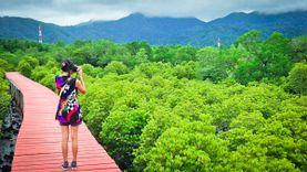 Unseen Green Season เดินเล่นเย็นใจ ป่าชายเลนบ้านนาใน สลักเพชร
