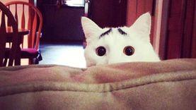 แมวเซเล็บตัวใหม่ ในโลกออนไลน์  Sam eyebrows หรือ แมวแซม คิ้วตก หน้านอยด์ สุดฮา