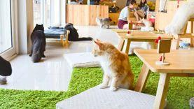 ร้านอร่อยเปิดใหม่ คาเฟ่แมว Makura Cat Café มาคุระ คาเฟ่ เทรนด์นี้ ถูกใจคนรักแมว