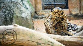 เที่ยววันเด็ก พาคุณหนูๆ เที่ยวสวนสัตว์ รวมสวนสัตว์น่าเที่ยว ใกล้กรุงเทพฯ