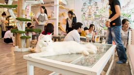 คาเฟ่แมว Caturday Café ชวนมาสนุกกับมวลมหาประชาแมว