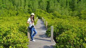เที่ยว ทุ่งโปรงทอง ป่าชายเลนแสมภู่ ปากน้ำประแสร์ สูดโอโซนธรรมชาติ จ.ระยอง