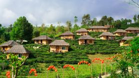 เที่ยวไร่ชา บ้านรักไทย นอนบ้านดิน จิบชาอุ่น หมู่บ้านชาวจีนยูนนาน แม่ฮ่องสอน