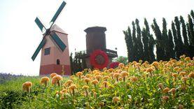 เที่ยวไร่องุ่น ทุ่งดอกไม้สีสวย ที่ Silver Lake พัทยา ลองไวน์ และน้ำองุ่นรสชาติเยี่ยม
