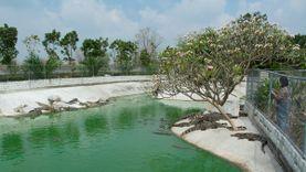 เที่ยวฟาร์มจระเข้ Midway ที่เที่ยวใหม่ลพบุรี นั่งชิลล์สวนหิน ถ่ายรูปกับนกกระจอกเทศ