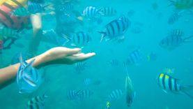 เที่ยวทะเลหน้าร้อน เกาะช้าง ดำน้ำหมู่เกาะรัง นอนชิลล์ที่เกาะหวาย ดูปะการังสีน้ำเงิน