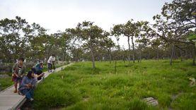 เที่ยวชัยภูมิ ชมดอกกระเจียวบานสะพรั่ง ที่อุทยานแห่งชาติป่าหินงาม