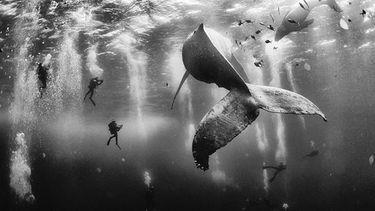 ประกาศผล 10 สุดยอดภาพถ่ายแห่งปี เนชันแนลจีโอกราฟิก ทราเวลเลอร์ 2015