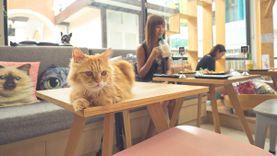 Cat up Cafe คาเฟ่แมว สุดชิลล์ ที่ The Up พระราม 3