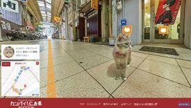 ฮิโรชิม่ามาแปลก ออกแผนที่ท่องเที่ยวสไตล์ใหม่ Cats Eye view เดินลัดเลาะสำรวจตรอกซอกซอยแบบเจ้าเหมียว