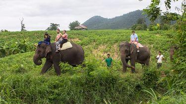ขี่ช้างชมธรรมชาติ กิจกรรมสนุกๆ ที่ Thom's Pai Elephant Camp ปาย