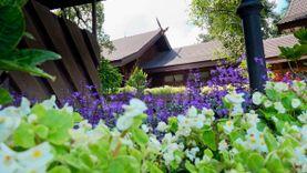 เที่ยวดอยตุง ชมดอกไม้เมืองหนาวสวนแม่ฟ้าหลวง เยือนพระตำหนักดอยตุง