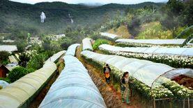 ขึ้นอินทนนท์ เที่ยว สถานีเกษตรหลวงอินทนนท์ ชมดอกไม้เมืองหนาวโครงการหลวง