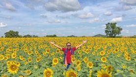 เปิดฤดูกาลท่องเที่ยวจังหวัดลพบุรี ชมทุ่งทานตะวันสีเหลืองบานสะพรั่ง