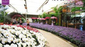 เที่ยวใกล้กรุงเทพฯ เดินชิลล์ชมดอกไม้ งานแสดงดอกไม้เมืองหนาว ดาษดาแกลเลอรี่ เขาใหญ่