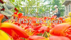 เพลาเพลินเพลิน ที่ เพลาเพลิน กระบองเพชร ดอกไม้เมืองหนาว นานาพันธุ์พืชสวย บุรีรัมย์