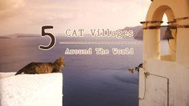 หมู่บ้านแมว รอบโลก 5 แห่ง ได้เจอเหมียว แบบทุกซอก ทุกมุม