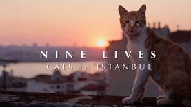 แมวจร แห่ง อิสตันบูล KEDI : Nine Lives - Cats in Istanbul สารคดีที่จะทำให้คุณหลงรักเหล่าแม