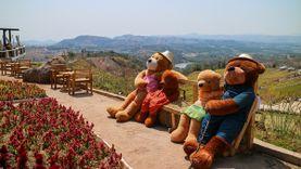 เดอะ หลุยส์ คอฟฟี่ ร้านกาแฟเขาค้อ บรรยากาศดี ชิลล์กับหมีเท็ดดี้แบร์สุดน่ารักในสวนสวย