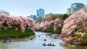 พาทัวร์แหล่งชม ซากุระ ที่ไม่ควรพลาด เกียวโต นาโกย่า ฟุกุโอกะ  และ ที่พักโดนใจในราคาสุดคุ้ม