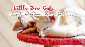 ไปมารึยัง ! Little Zoo Café น้องหมาจิ้งจอก เมียร์แคท แรคคูน มาเสิร์ฟของอร่อย