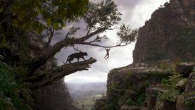 ตามรอย เมาคลี กับ เสือดำ และหมีขี้เกียจ มีอยู่จริง ในป่าอินเดีย