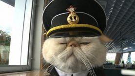 เปิดตัว เจ้าเหมียว เซเลอร์ แมวเซเล็บ กัปตันเรือขี้ง่วงจากรัสเซีย