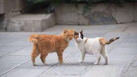 บอกแล้วแมวจะครองโลก! ชาวเน็ตจีนรวมพลัง ปกป้องแมวไม่ให้ถูกไล่ ที่ซีอาน ประเทศจีน