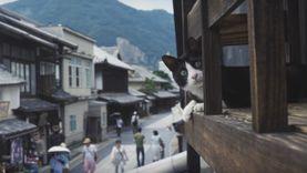 เที่ยวไหนเหมียวพาไป ฮิโรชิม่า ออกแผนที่สุดน่ารัก เดินชมเมืองในมุมมองแมว