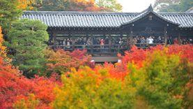 วัดดังใน เกียวโต ประกาศห้ามถ่ายภาพ ใบไม้เปลี่ยนสี ห่วงนักท่องเที่ยวเกิดอันตราย