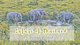 วันเดียวก็เที่ยวได้ สามร้อยยอด กุยบุรี แดนซาฟารีเมืองไทย