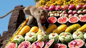 งานเลี้ยงโต๊ะจีนลิง ครั้งที่ 28 ประจำปี 2559 จังหวัดลพบุรี