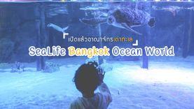 เปิดแล้ว อาณาจักรเต่าทะเล SeaLife Bangkok Ocean World สยาม พารากอน ดำดิ่งสู่โลกใต้ท้องทะเล