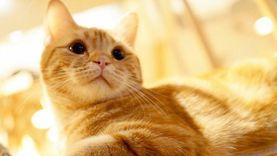 ชมร้าน Mocha คาเฟ่แมว สุดหรู แห่งฮาราจูกุ ดูแล้วจะรู้ว่าเรามันก็แค่ทาส