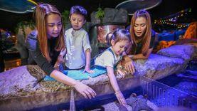 """ซีไลฟ์ฯ รับวันเด็ก ชวนสัมผัสสัตว์ทะเลวัยอนุบาล ในแคมเปญ """"Baby Creatures...เพื่อนรักตัวจิ๋ว"""""""