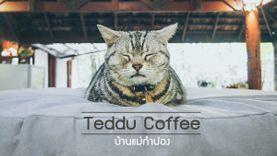 Teddu Coffee ร้านกาแฟ บ้านแม่กำปอง เชียงใหม่ วิวดี ริมน้ำตก นั่งชิลล์กับน้องแมวได้ทั้งวัน