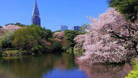 ญี่ปุ่นเผย เคยปล่อยนักท่องเที่ยว เข้าสวนสาธารณะแห่งชาติฟรี เพราะกลัวคุยไม่รู้เรื่อง!