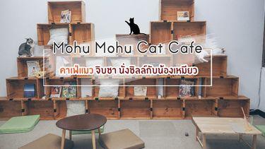 Mohu Mohu Cat Cafe คาเฟ่แมว ลาดพร้าว 26 จิบชา นั่งชิลล์กับน้องเหมียว (มีคลิป)